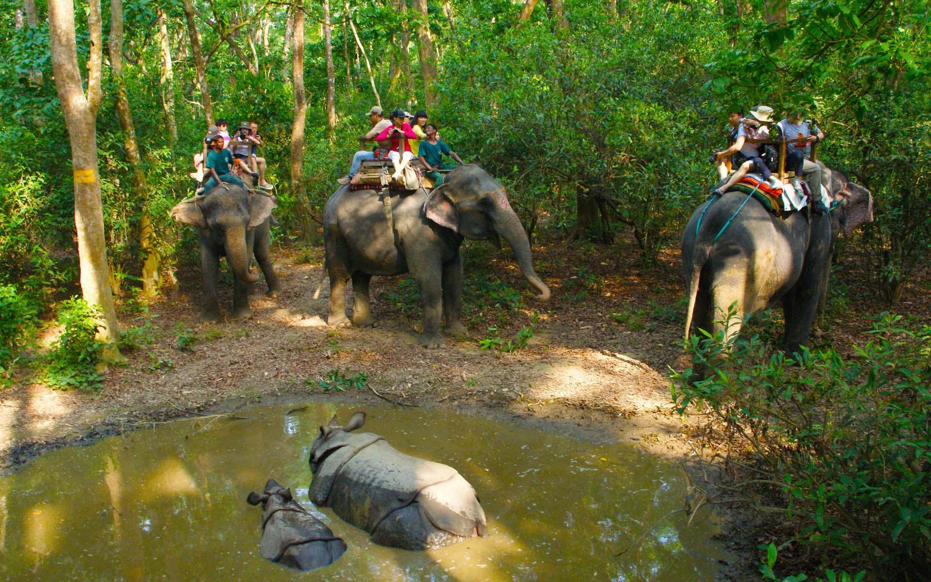 Chitwan Wildlife Safari