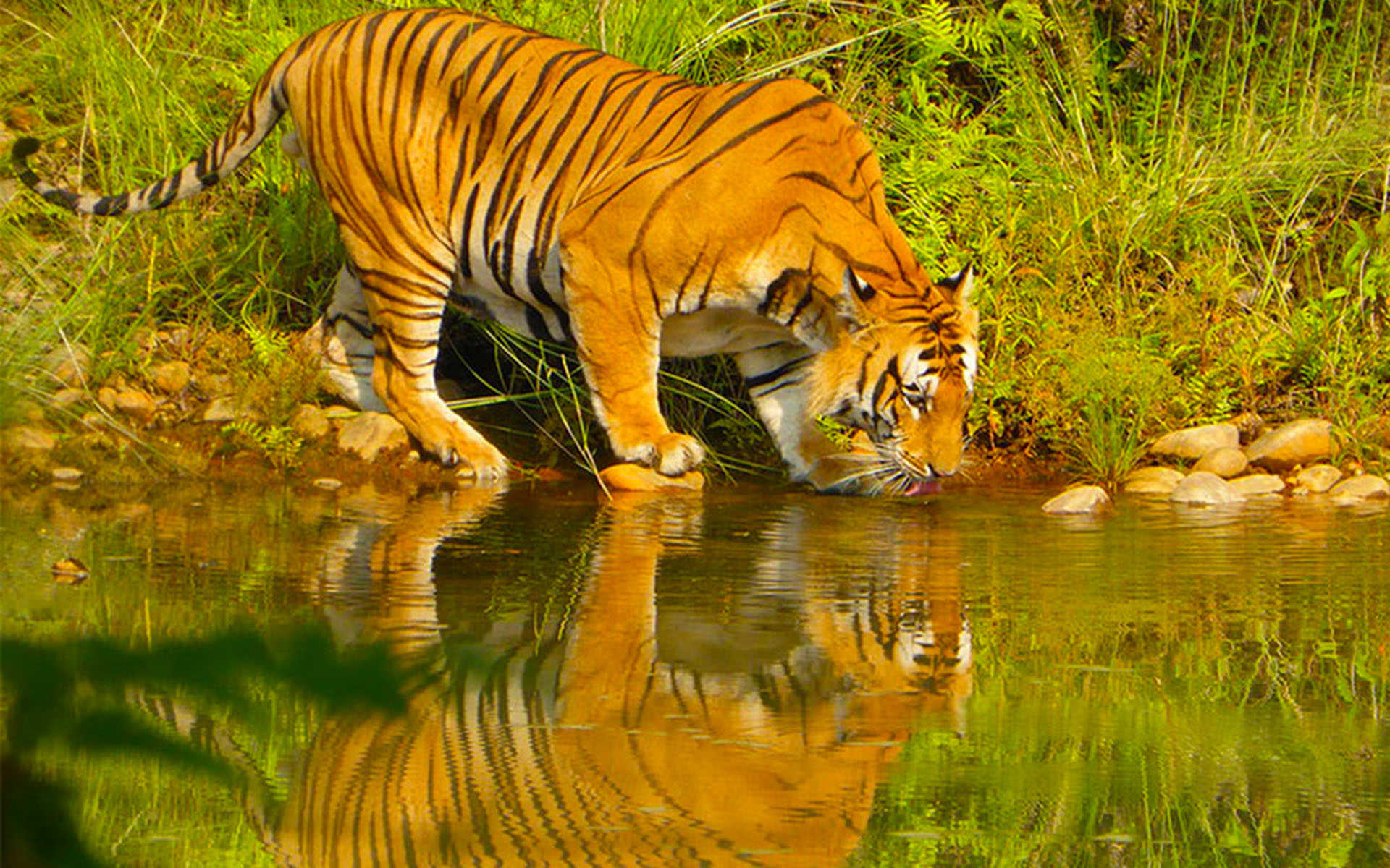 Bardiya Wildlife Tour